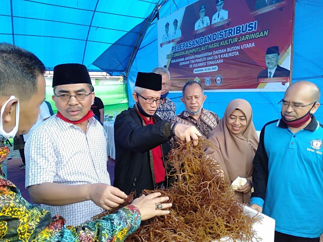 Wagub Sultra, Lukman Abunawas didampingi Bupati Butur Abu Hasan saat melepas Bibit Unggul Rumput laut Hasil Kultur Jaringan