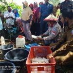 Bupati Arusani saat menghadiri panen perdana Ubi di Desa Bola